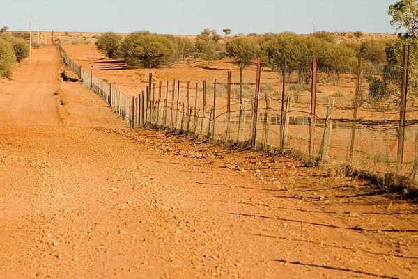 Dingo-Fence
