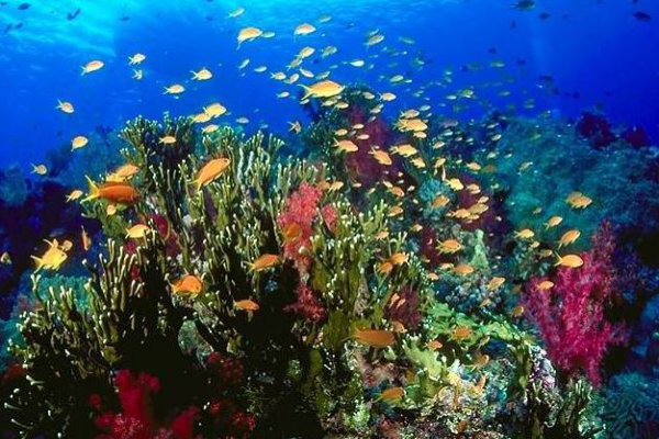 great-barrier-reef-corals